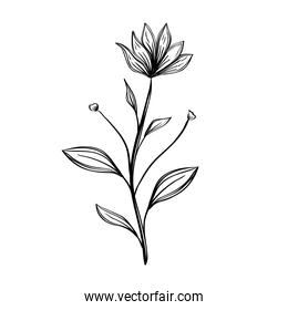 flower and leafs plants nature ecology drawn icon