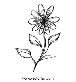 flower and leafs plants nature ecology drawn