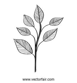leafs plants nature ecology drawn
