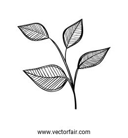 leafs plants nature ecology drawn icon