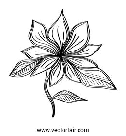 flower and leafs nature ecology drawn isolated icon