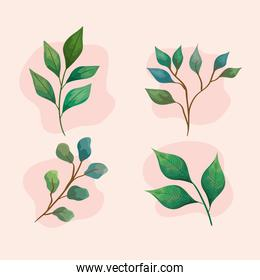 bundle of leafs four and branches set icons