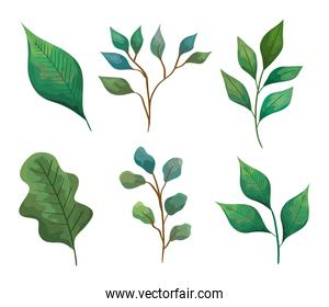 bundle of six leafs and branches icons