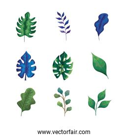 bundle of nine leafs and branches set icons
