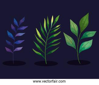 bundle of three branches set icons