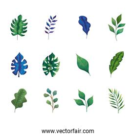 bundle of twelve leafs and branches set icons