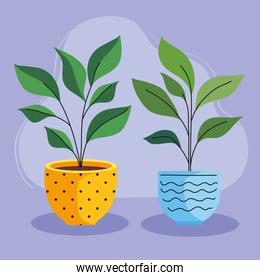 two house plants in ceramic pots