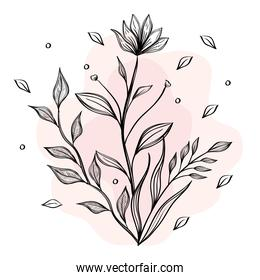 flower and leafs plants nature drawn icon