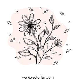 flower and leafs plants ecology drawn icon