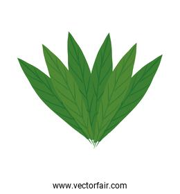 leaves icon isolated vector design