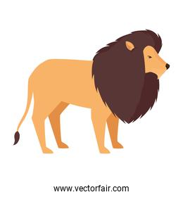 lion african animal wild character
