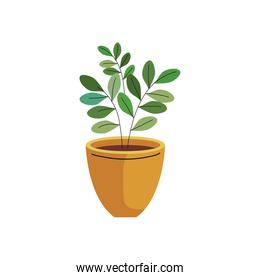 house plant in ceramic pot yellow color