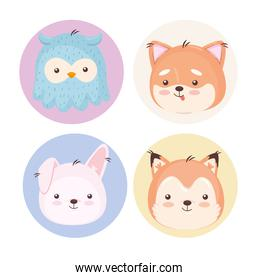 Kawaii animals cartoons symbol collection vector design