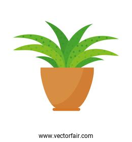 icon of indoor plant in a pot, colorful design