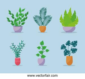 icon set of beautiful indoor plants, colorful design