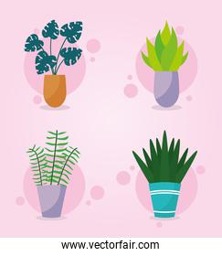 icon set of indoor plants, colorful design