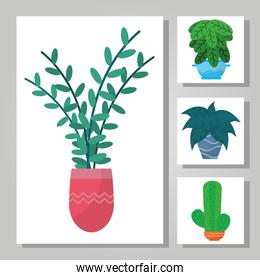 indoor plants in a pot collection, colorful design