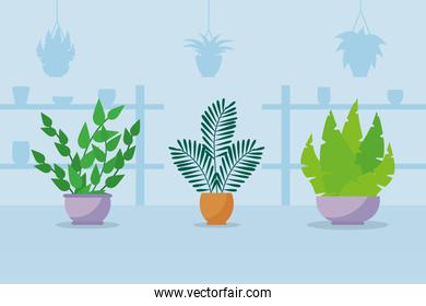 three indoor plants in a pots, colorful design