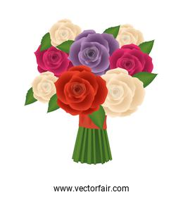 roses flowers isolated vector design