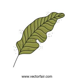 leaf plant ecology nature green icon