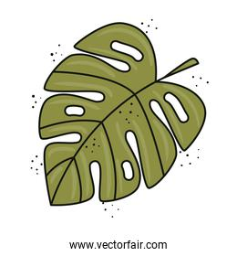 green tropical leaf plant ecology nature