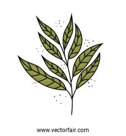 tropical exotic branch with leafs nature isolated icon