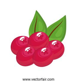 berries delicious fresh fruit nature icon
