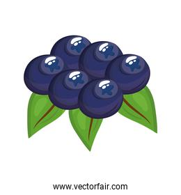 blueberries delicious fresh fruit nature icon