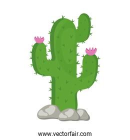 cactu plant exotic with rocks and pink flowers