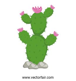 cactu plant exotic with rocks and pink flowers icon