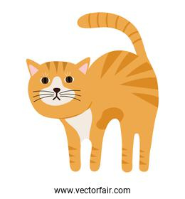 cute little cat yellow color pet character