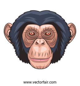 monkey animal wild head character in white background