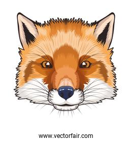 fox animal wild head character in white background