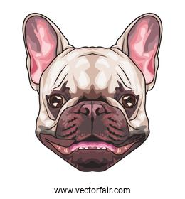 french bulldog animal head character in white background