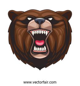 grizzly bear animal wild head colorful character