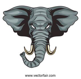 elephant animal wild head colorful character icon