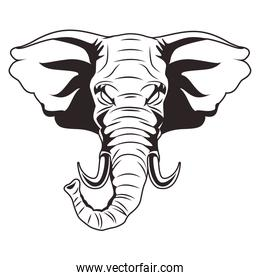 elephant animal wild head character icon