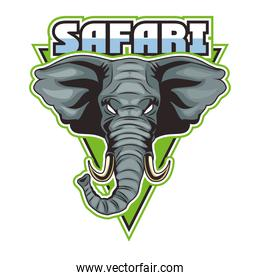 elephant animal wild head with safari lettering