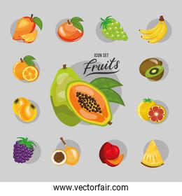 bundle of thirteen fresh fruits set icons and lettering