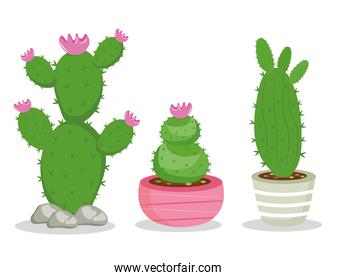 bundle of three cactus plants icons