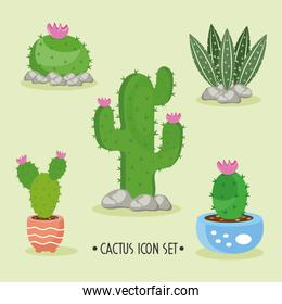 bundle of five cactus plants and lettering set icons