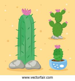 bundle of three cactus plants set icons