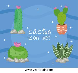 bundle of four cactus plants and lettering set icons