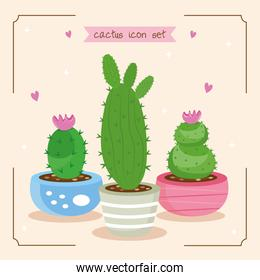 bundle of three cactus plants and lettering set icons