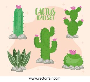 bundle of five cactus plants and lettering icons