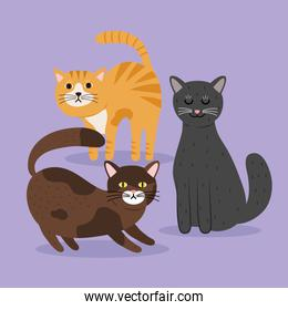 bundle of three cats differents colors mascots characters