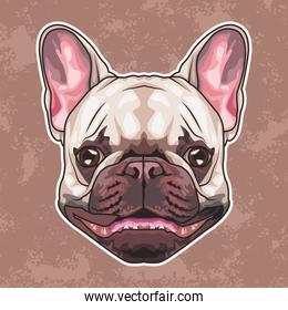 french bulldog animal head character in brown background
