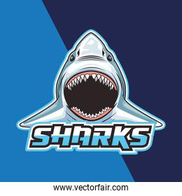 shark animal wild head character in blue background
