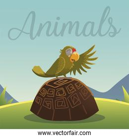 cartoon animals parrot on the turtle in grass nature