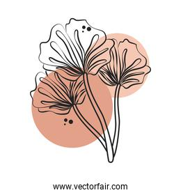 flowers foliage leaf nature line art with colored spot